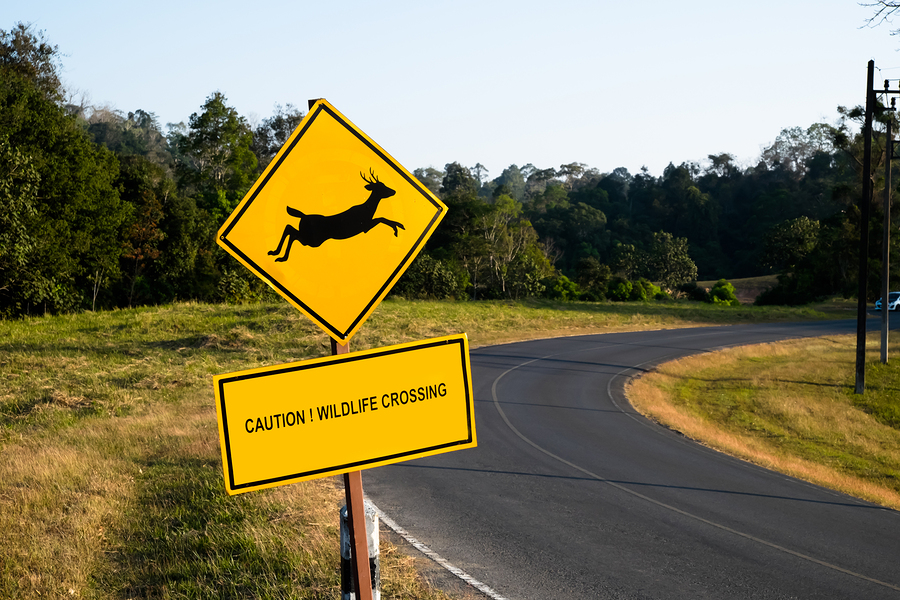 If You Hit a Deer, Bring Your Car Here!