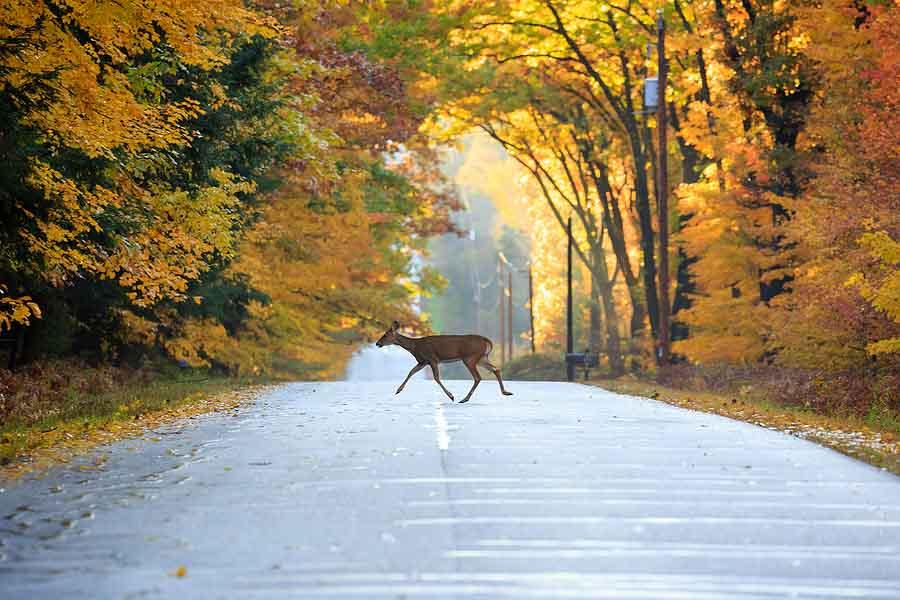 Oh Deer! Tips about Driving in Deer Season